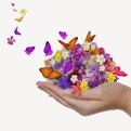 hand-holds-flower-spill-many-flowers-and-butterfly_fydbgcr_